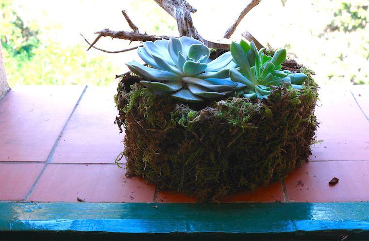 Centro con plantas grasas y musgo