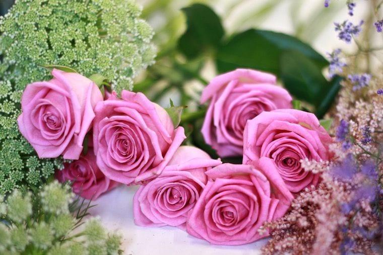 rosas fuxia exquisitae
